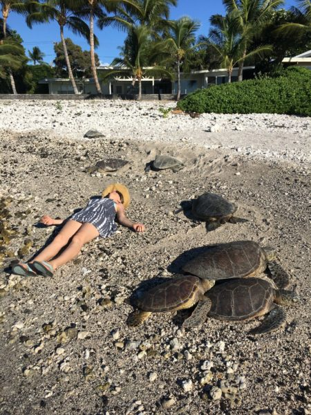 molly and the turtles